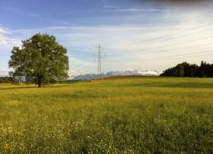 Landschaft der Gegensätze: BLN-Gebiet 1401 mit Starkstromleitung (Foto: Barbara Marty).